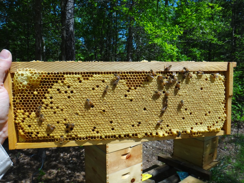 bee frame may 2014 (2)