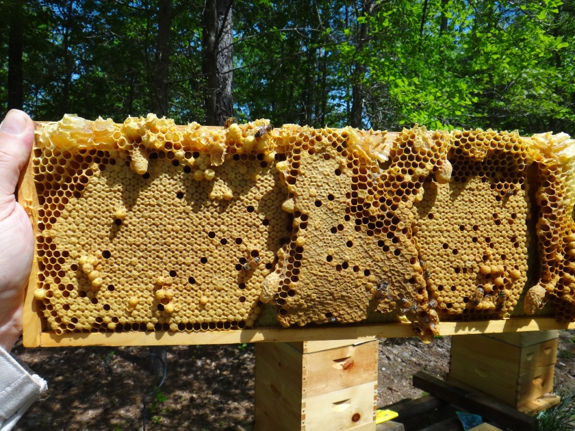 bee frame may 2014